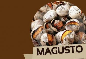 magusto2